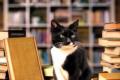 Leggere è una faccenda da gatti di Alex Howard - Garzanti
