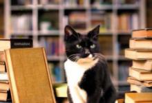 Leggere è una faccenda da gatti di Alex Howard – Garzanti